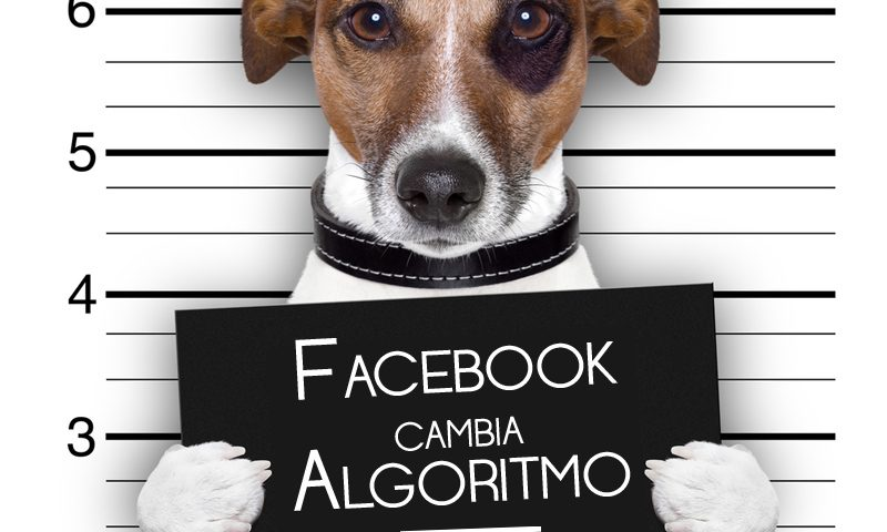 Facebook cambia algoritmo: riflessioni a margine